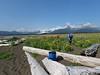 Hallo_Bay_August_2020_Katmai_Alaska_0059