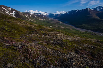June on the High Tundra