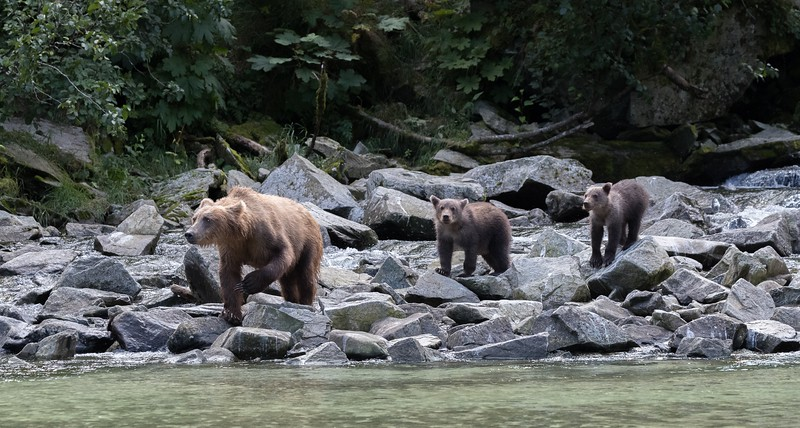 Mother and cubs go fishing