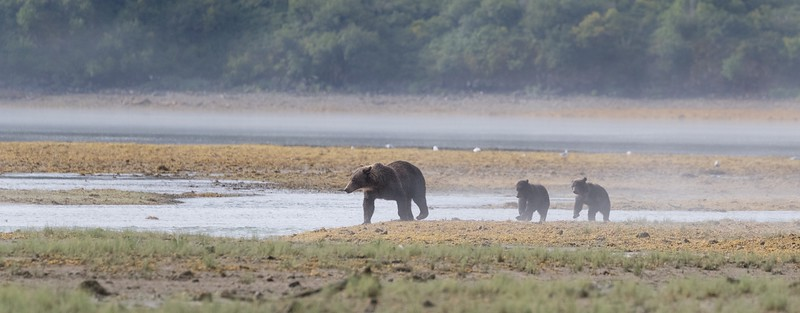 Mother and cubs in the mist
