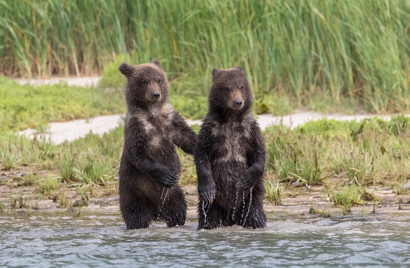 Cubs-of-the-year watching mum