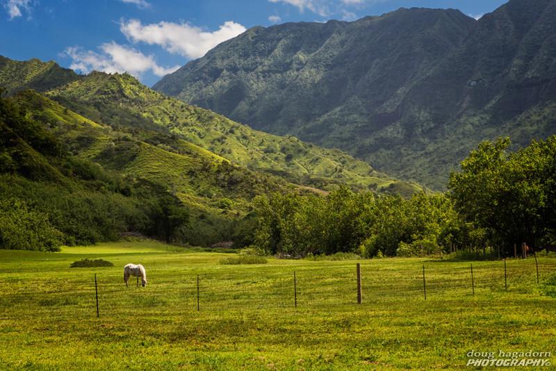 Green Pastures (#0053)