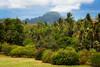 Hawiian Gardens