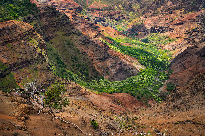 Hello Kauai My Old Friend, It's Time To Visit You Again (#0681)