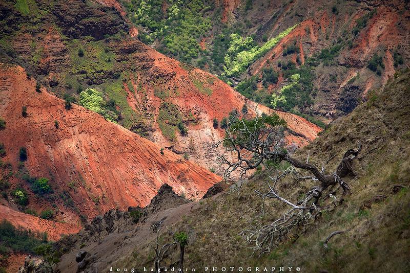 The Waimea Hillside (#0533)