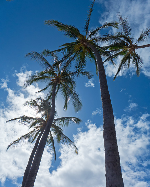 Between swim sessions- watching the clouds go by underneath the palms.