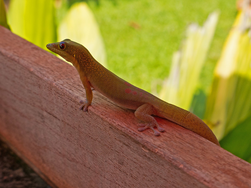 A resident of Anini beach.