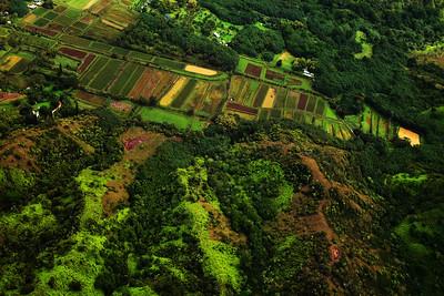 Farming fields ( F U Helie's), Kauai, HI