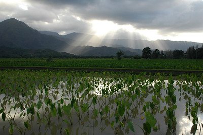 Hanalei Valley with sunbeams - Northeast Kauai
