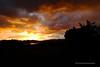 Koloa Sunset Over Pond Cell Shot (0635) Marked