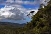 Waimea Canyon Kalalau Trail #19 (5757) Marked