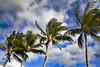 Koloa Landing Nothing But Palms (5325) Marked