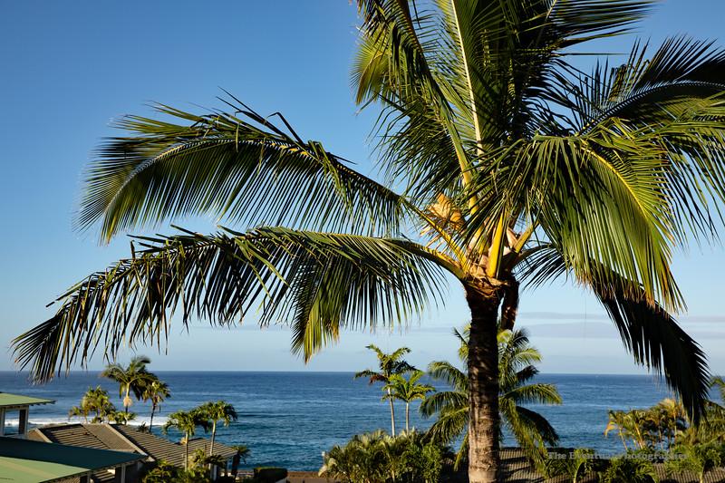 Koloa Landing Palm From Balcony (5618) Marked