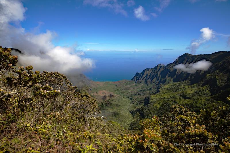 Waimea Canyon Kalalau Trail #8 (5696) Marked