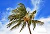 Poipu Beach One Palm (5357) Marked