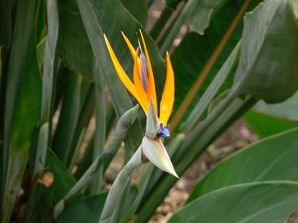 Kauai - Oct/Nov 2006
