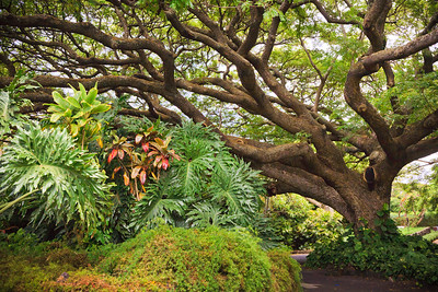 Tropical Tree