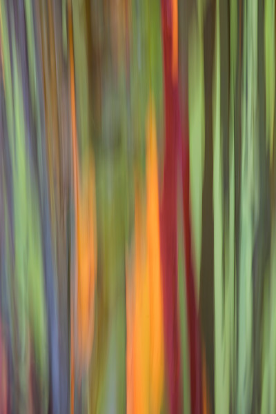Eucalyptus Tree Motion Blur Vertical