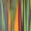 Eucalyptus Tree Motion Blur Vertical