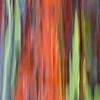 Eucalyptus Tree Motion Blur