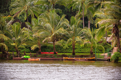 Palms and Kayak
