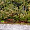 Palms and Kayak