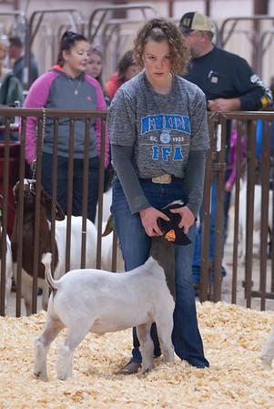 kay_county_showdown_goats_20191207-48