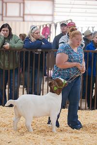 kay_county_showdown_goats_20191207-23