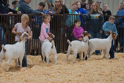 kay_county_showdown_goats_20191207-17
