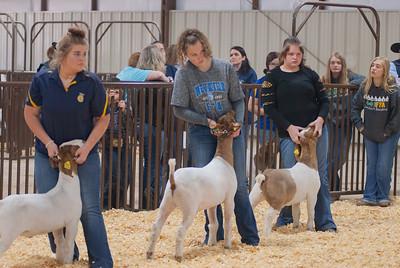 kay_county_showdown_goats_20191207-31