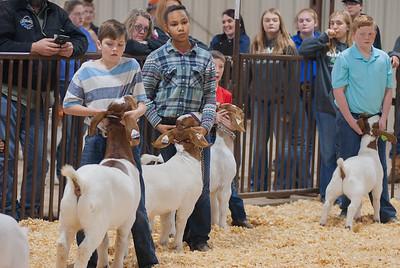 kay_county_showdown_goats_20191207-22