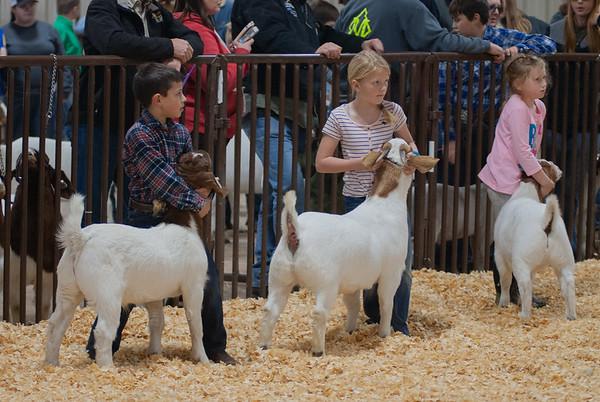 kay_county_showdown_goats_20191207-19