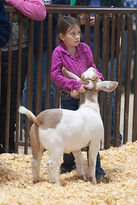 kay_county_showdown_goats_20191207-40