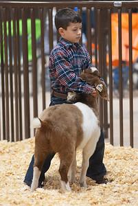 kay_county_showdown_goats_20191207-39