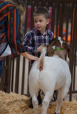 kay_county_showdown_goats_20191207-7