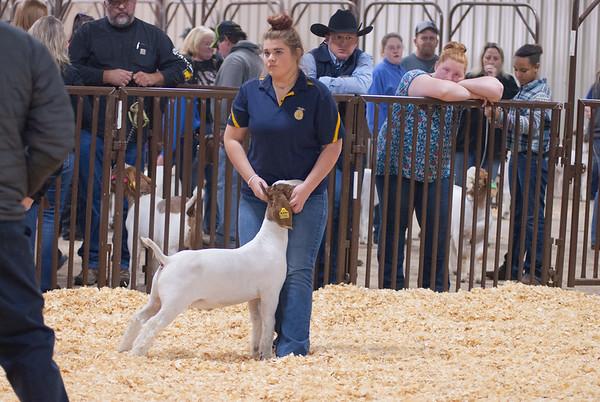 kay_county_showdown_goats_20191207-43