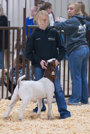 kay_county_showdown_goats_20191207-46