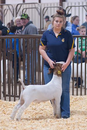 kay_county_showdown_goats_20191207-47