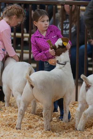 kay_county_showdown_goats_20191207-14