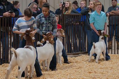 kay_county_showdown_goats_20191207-21