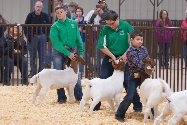 kay_county_showdown_goats_20191207-45