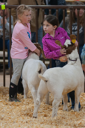 kay_county_showdown_goats_20191207-16