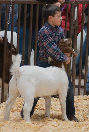 kay_county_showdown_goats_20191207-18