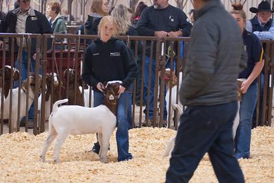 kay_county_showdown_goats_20191207-42