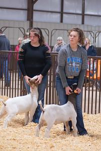 kay_county_showdown_goats_20191207-44