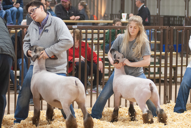 kay_county_showdown_sheep_20191207-23