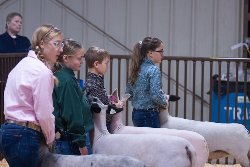 kay_county_showdown_sheep_20191207-16