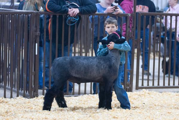 kay_county_showdown_sheep_20191207-9