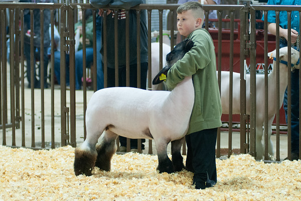 kay_county_showdown_sheep_20191207-14