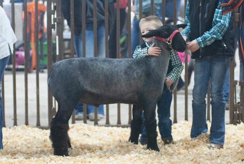 kay_county_showdown_sheep_20191207-7